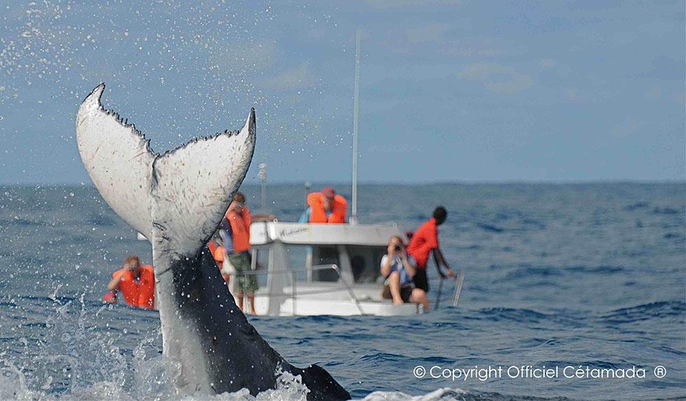 L'Hôtel Solidaire Mangily vous donne rendez-vous pour aller à la rencontre des baleines