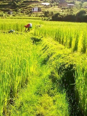Travail d'équipe des élèves de la ferme du site Fianarantsoa