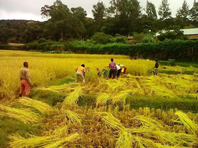 Travaux à la ferme École Fianarantsoa