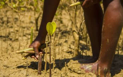 Planter des arbres (qui stockent du carbone) pour compenser nos émissions de CO2