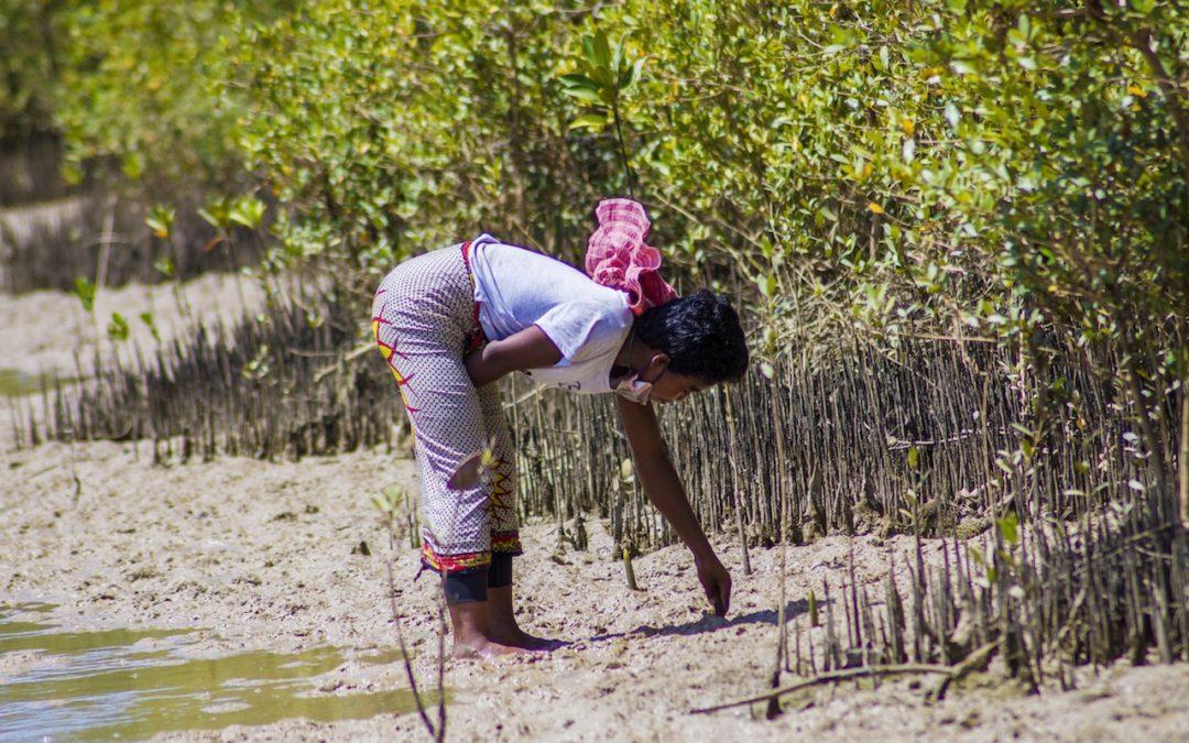 ONG Bel Avenir face aux forêts de mangrove largement menacées.